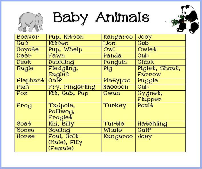 baby animal names Photos – Free Baby Shower Games Printable Worksheets